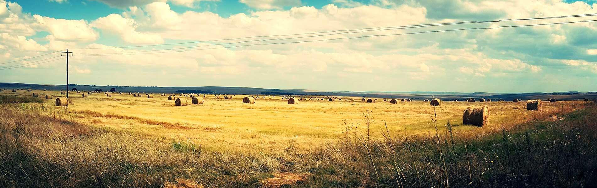 Property/Farm